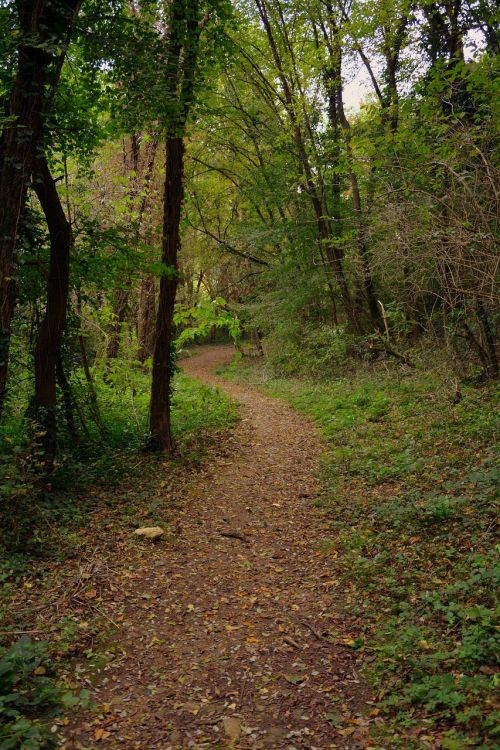 forest trail e5