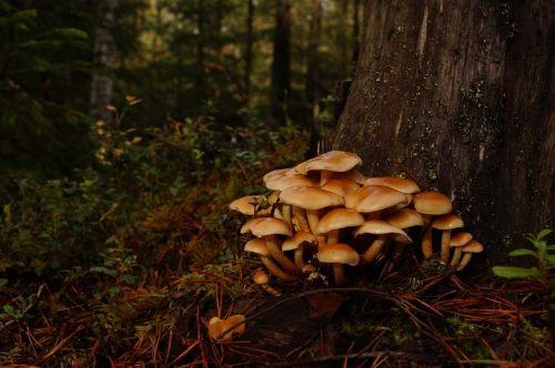 forest trees mushrooms