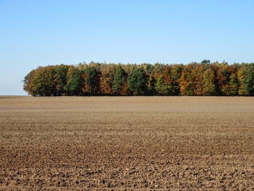 forest field landscape