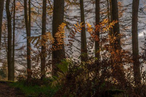 forest fern bracken