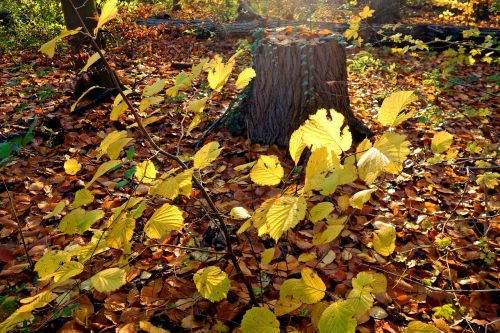 forest tree trunk leaves