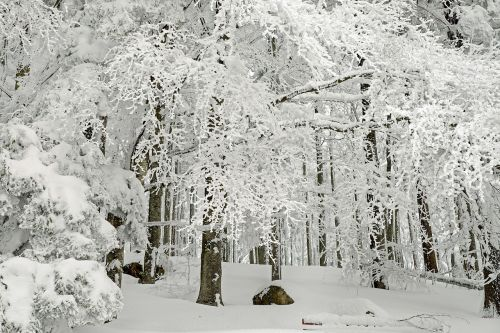 forest winter forest winter