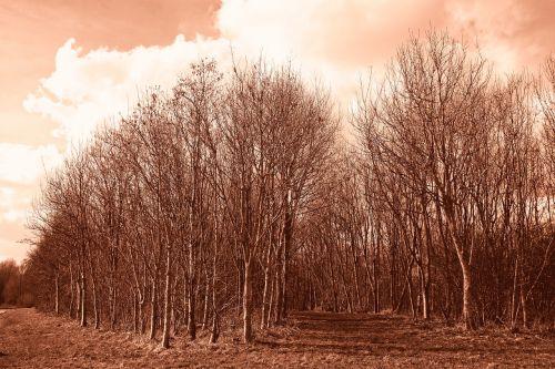 miškas,giraitė,medis,bagažinė,lieknas medis,plikas medis,žiemos medis,lapuočių,kelias,rožinė dangaus,debesys,kraštovaizdis,olandų kraštovaizdis,kaimas,kaimas