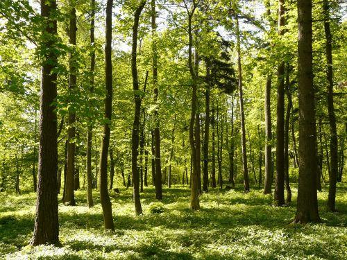 forest spring sunlight