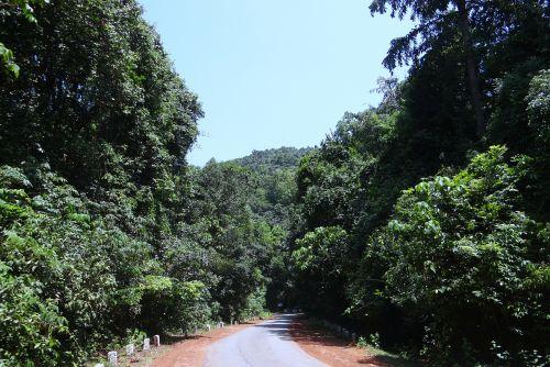 forest evergreen dense