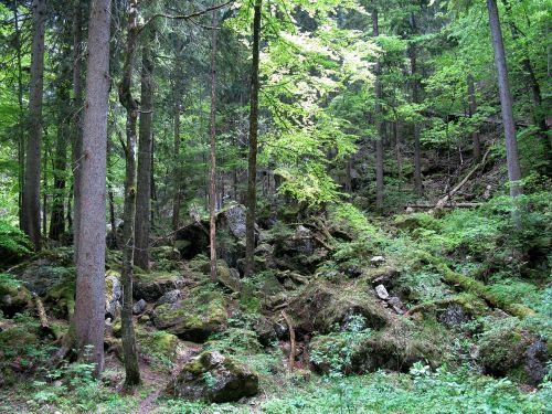 forest kristin poellatschlucht