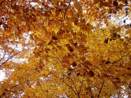 forest autumn nature