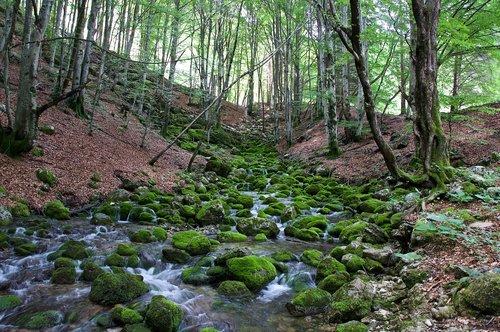 forest  torrent  nature