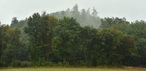 forest  haze  fog