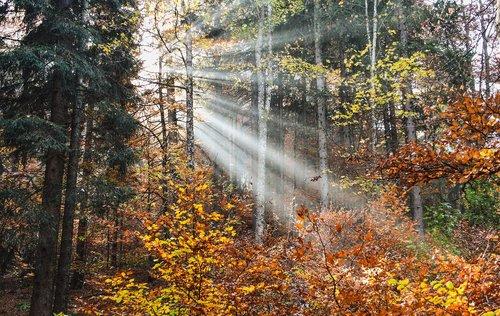 forest  radius  light