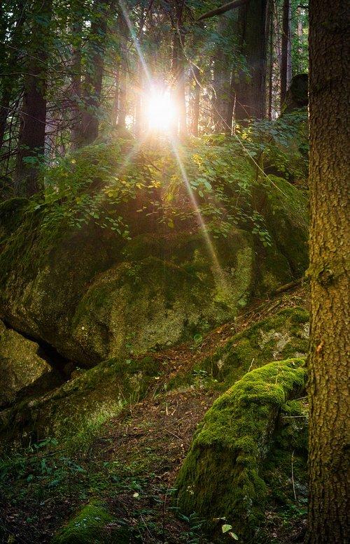 forest  waldviertel  sun