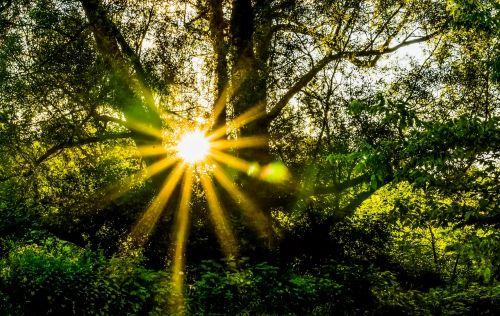 forest hope radiant