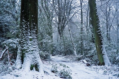 forest  winter  nature