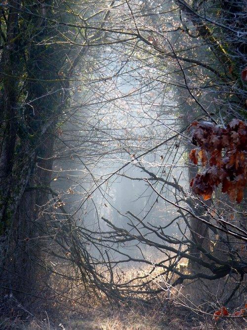 forest  radius  sun