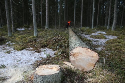 forest  tree  logs