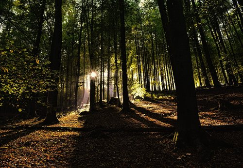 forest  nature  mysterious