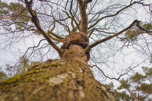 forest  tree  darß