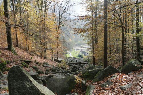 forest stones autumn
