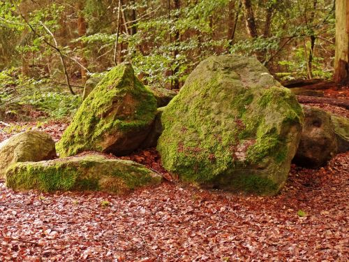 forest stones nature