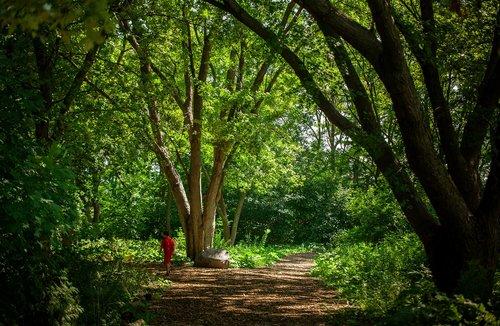 forest  hiking trail  walk