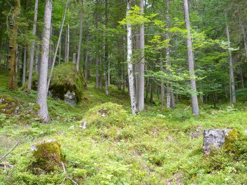 forest moss quaint