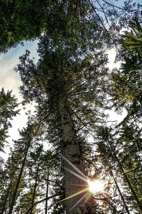 forest  fir forest  coniferous forest