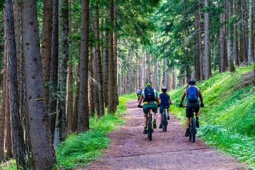 forest  forest road  mountain bike