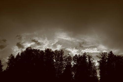 forest threatening clouds