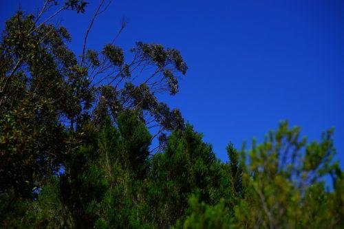 forest scrub tree heath