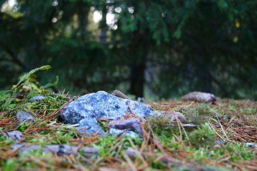 forest autumn finnish