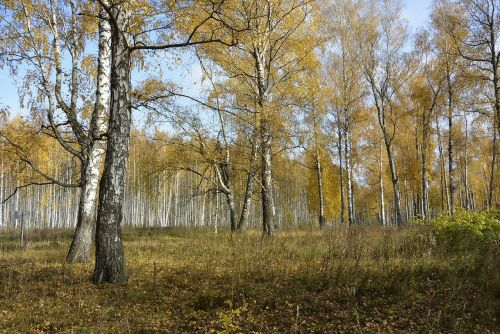 forest autumn forest autumn