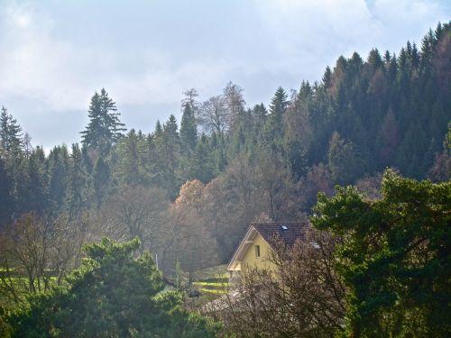 forest mystical autumn