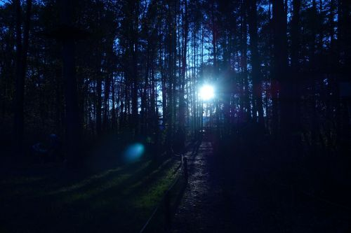 forest trees sunrays