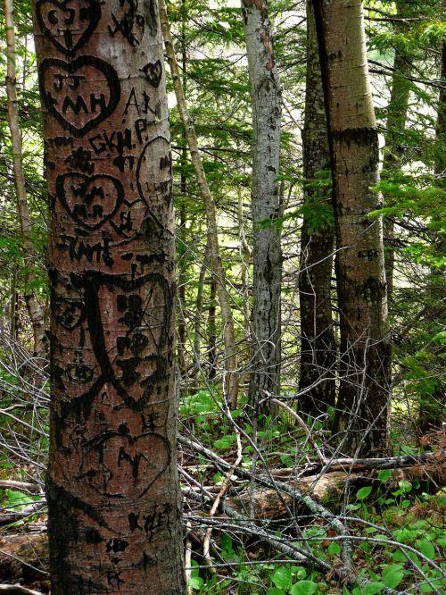 forest trees graffiti