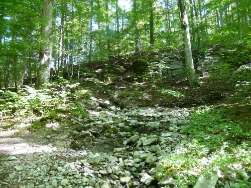 forest bach source