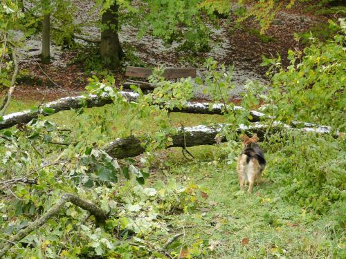 forest tree destroyed