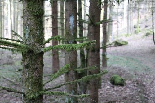 forest,tree,moss,aesthetic,nature,green