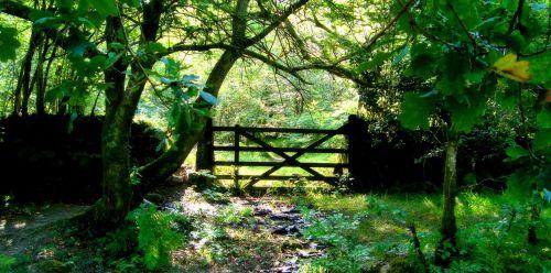 forest prado nature