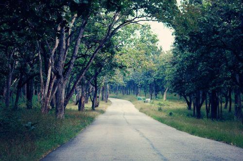 miškas, kelias, gamta, medis, kraštovaizdis, žalias, lauke, kelionė, kelias, kelias