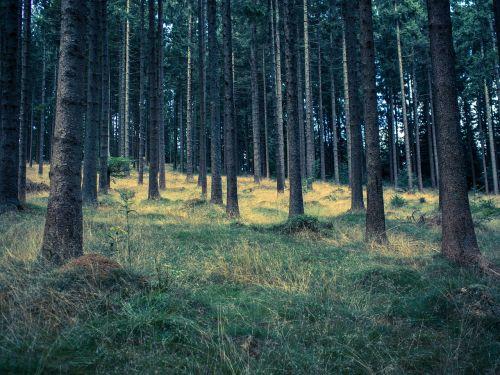 forest meadow waldviertel