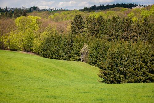 forest eifel mixed forest