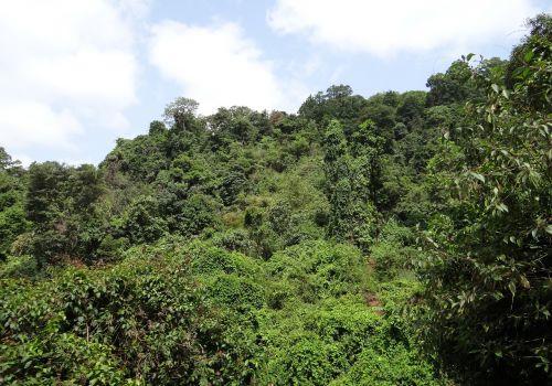 forest evergreen sahyadri