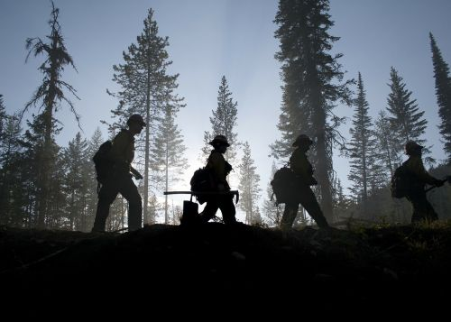 forest trees firefighters