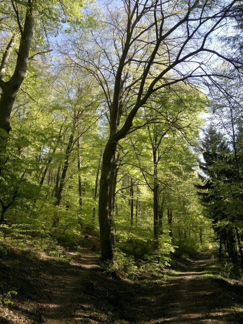 forest holy mountain heidelberg