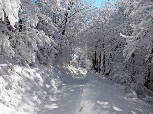 forest winter snow