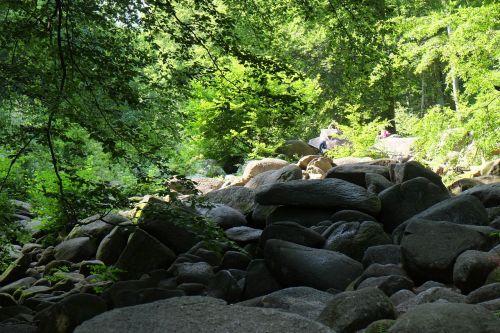 forest quarry rock