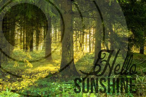 forest morgenstimmung sun