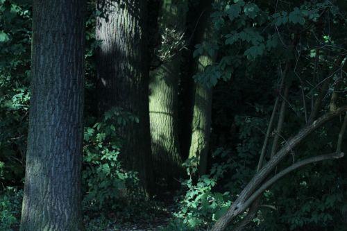 forest mysticism summer day