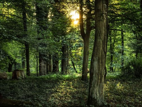 forest trees plenty of natural light