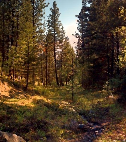 forest woods light